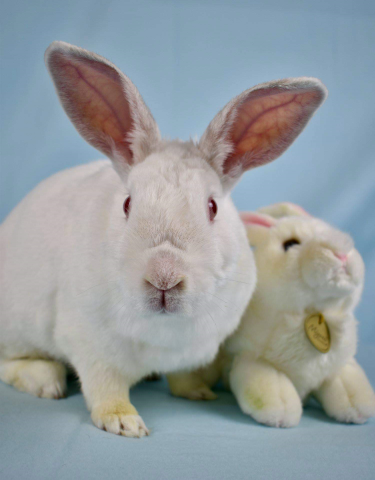 Rabbits available for adoption