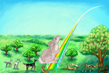 Rabbit Rainbow Bridge