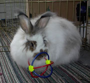 rabbit at home with toy