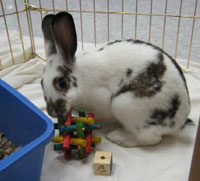 rabbit in cage with toy